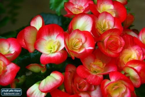 اجمل زهرة في العالم hwaml.com_1293803358_473.jpg