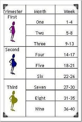 جدول اسابيع الحمل يوضح انتي hwaml.com_1297019258_398.jpg