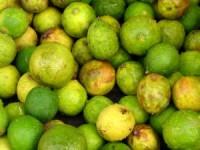 تختارين الخضروات الفاكهة hwaml.com_1308403618