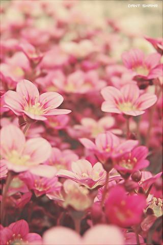 كل الاشياء تبدو اجمل حين اكون معك ~ للآيفون hwaml.com_1312725972