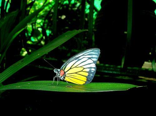 حديقة الفراشات كوالالمبور hwaml.com_1320095137