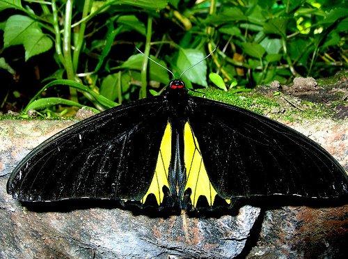 حديقة الفراشات كوالالمبور hwaml.com_1320095138