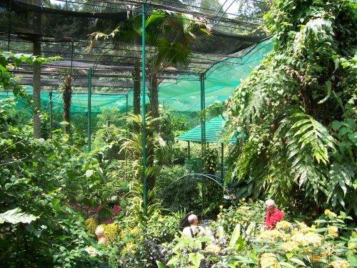 هذه الحديقة أكثر من 6000 فراشة بعضها من اكبر فراشات
