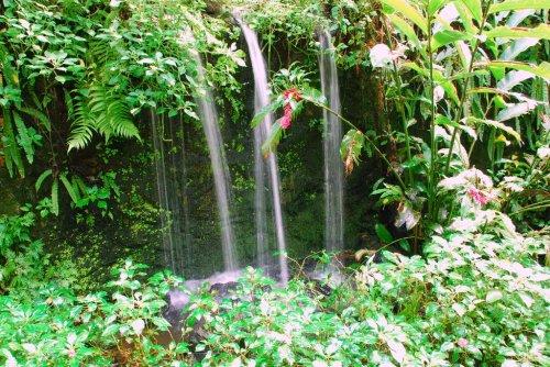 حديقة الفراشات كوالالمبور hwaml.com_1320095140