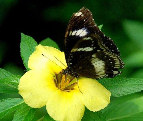 حديقة الفراشات كوالالمبور hwaml.com_1320095141