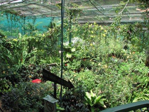 مصغرة لغابة استوائية بنباتاتها التي تزيد عن 15000 نبته وتضم
