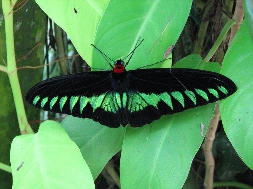 حديقة الفراشات كوالالمبور hwaml.com_1320095142
