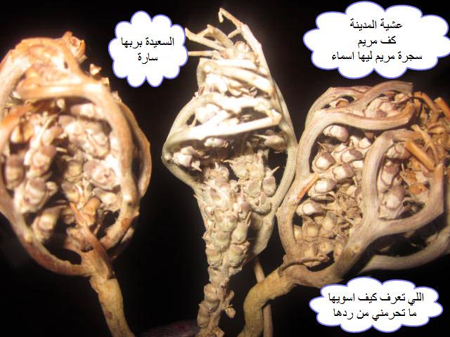 خلطه للحمل من اول وثاني مره تحملين باذن الله الصفحة 3