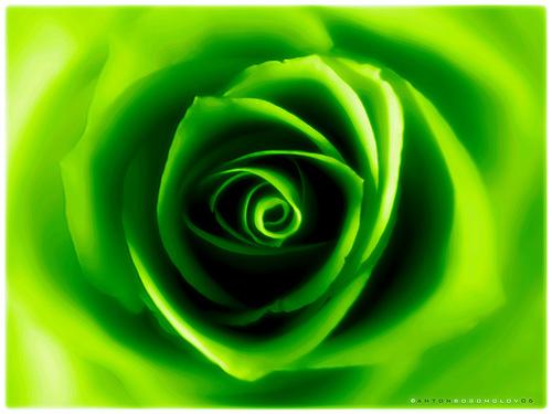 اللون الأخضر يقوي قدرة طفلك العقلية ! hwaml.com_1329506192