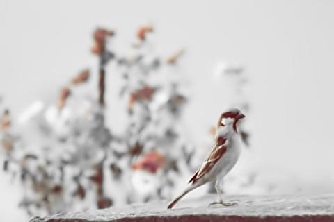 يآ طيور الشوق خذيني له تكفين ..  رمزيات hwaml.com_1336338207