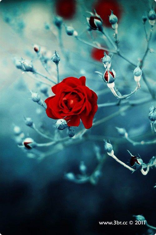 اجمل خلفيات حب ورومانسية متنوعة 2012