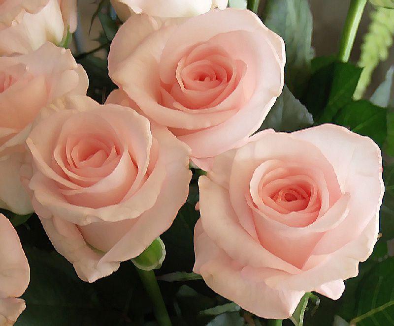 التعبير الشكر,إتيكيت الإعراب الشكر 2012 hwaml.com_1336949620_503.jpg