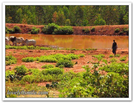 طبيعة أثيوبيا الجميلة 2013 أثيوبيا hwaml.com_1339339504_834.jpg
