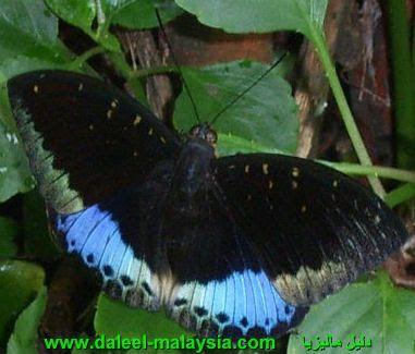 الفراشات 2013 الفراشات 2014 2013 hwaml.com_1339798828