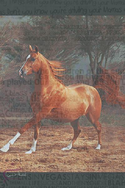 خيول جميلة للايفون اجمل للايفون