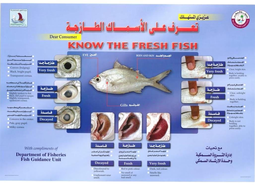 معرفة الاسماك الطازجة طريقة معرفة