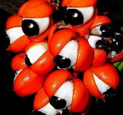 نبات عيون .... سبحان الله