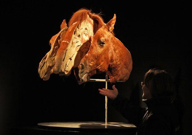 متحف حيوانات بدون جلد 2020 صور فن المتحف حيوانات محنطه