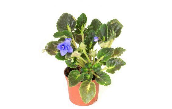 افضل 9 نصائح لتزيين عش الزوجية بالنباتات الطبيعية